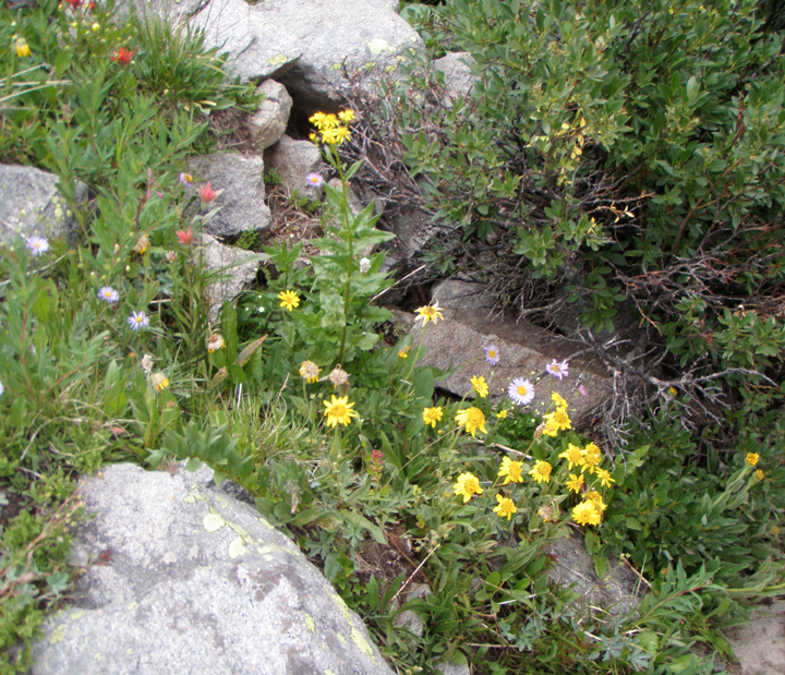 A group of yellow, red and white flowers grow amid green vegetation.